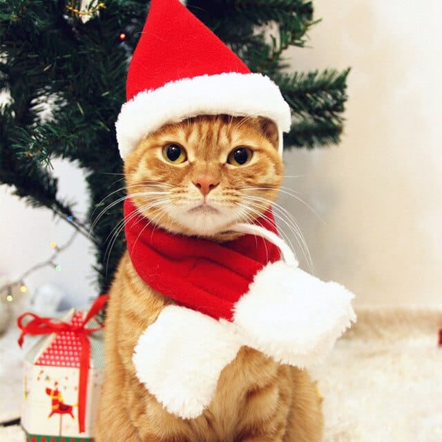 Christmas Party Cat - Pros and Cons of Freelancing Vs Full-Time Job