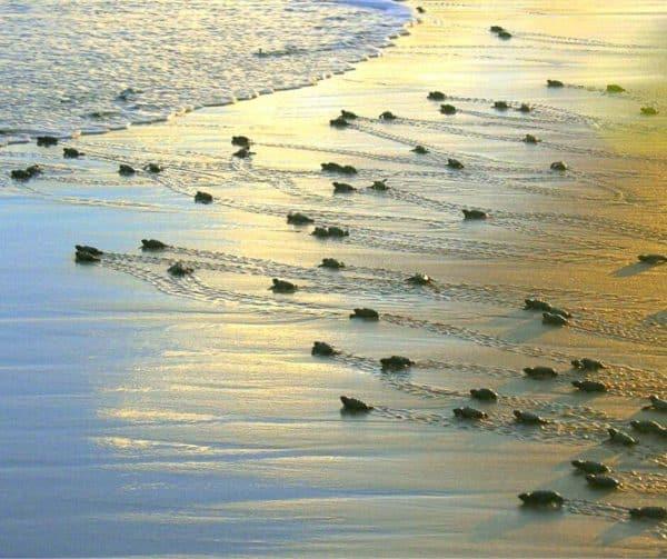 What To Do In Praia Da Pipa, Brazil - Guide