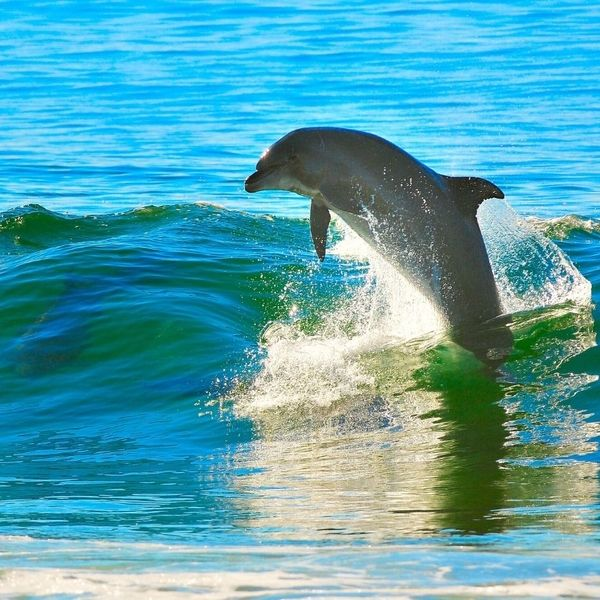 Wild Dolphins - Guide to Praia Da Pipa, Brazil
